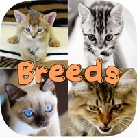 Codes for Cute Cat Breed Quiz Games Hack