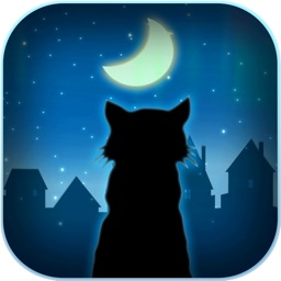 Cats Play Out - Night and Day Adventure
