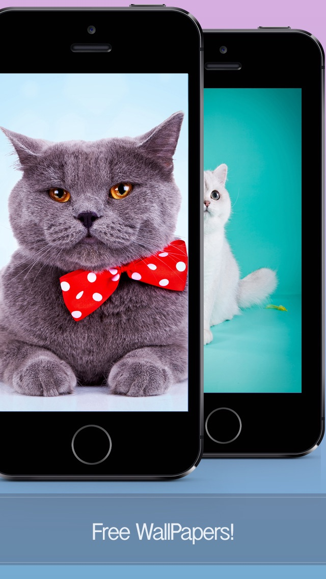 Cat Wallpapers, Themes & Backgrounds - Download Cute Cats HD Images FREE screenshot two