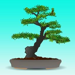Bonsai Tree Guide - Everything You Need To Know Bonsai Tree !