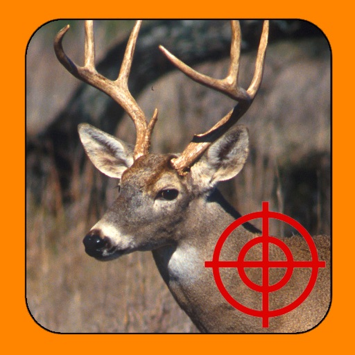 White Tail Deer Hunt