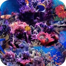 Activities of Free Ocean Jigsaw Puzzle