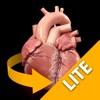 心臓解剖 Heart 3D Atlas of Anatomy Preview