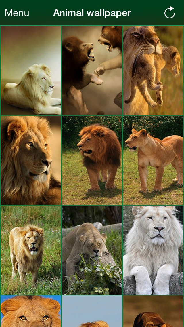 Animal wallpaper for iPhone: cats, dogs, lions Screenshot