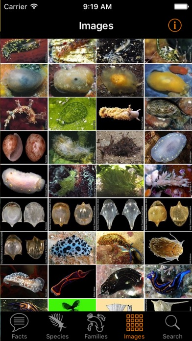 nudibranch id western atlantic app price drops