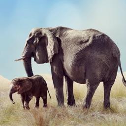 Elephant Sounds!