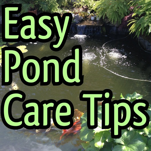 How to Care for Your Pond:Tips and Tutorial