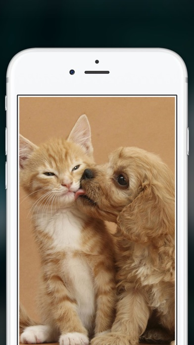 Cute Puppies Wallpapers  - dog pictures for free! screenshot three