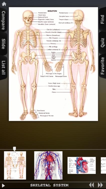 Human Body Database screenshot-3