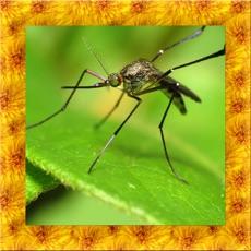 Activities of Mosquito Simulator 3D