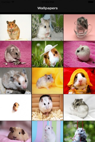 Hamster Wallpapers screenshot 1