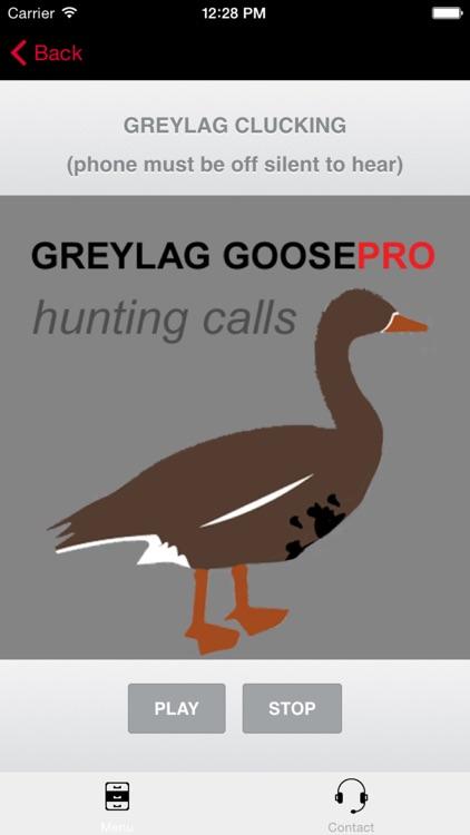 REAL Greylag Goose Hunting Calls - Greylag Goose CALLS & Greylag Goose Sounds! screenshot-0