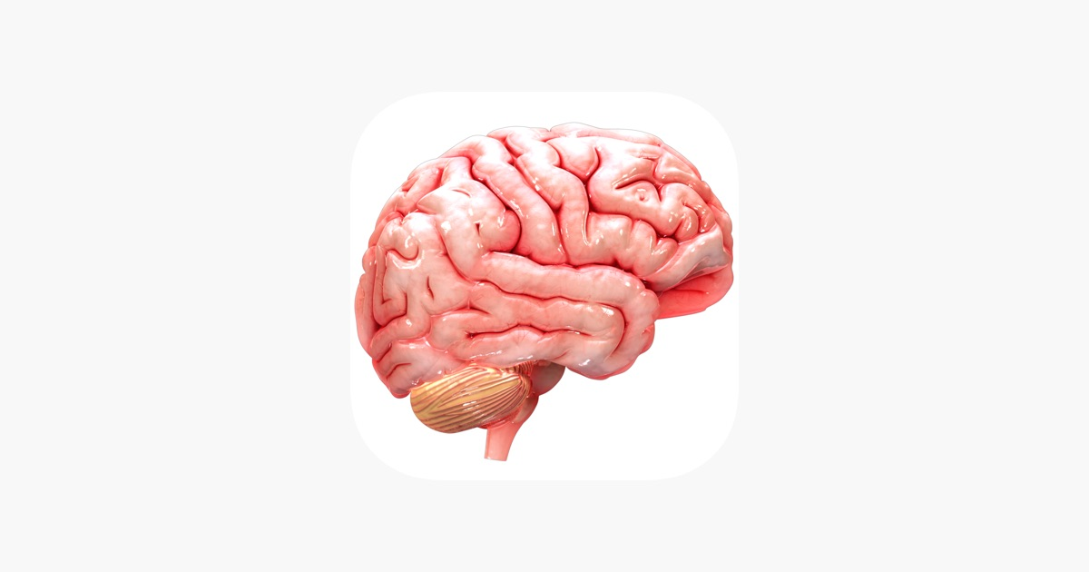 Virtual Reality Vr Human Brain On The App Store