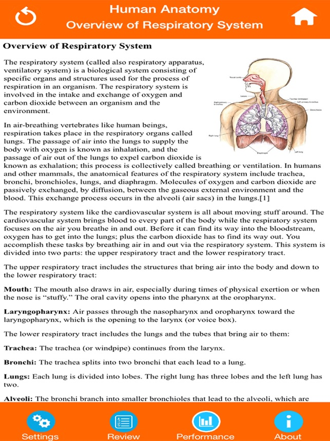 Human Anatomy Respiratory System On The App Store