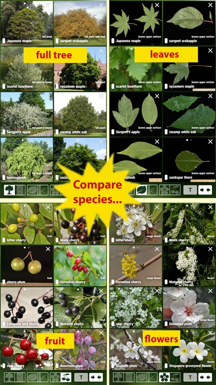 Tree Id USA - identify over 1000 of America's native species of Trees, Shrubs and Bushes screenshot-3