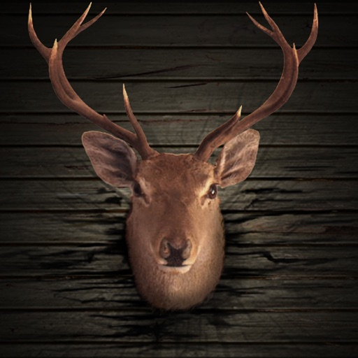 Ace Hunter 3D : Big Buck Deer