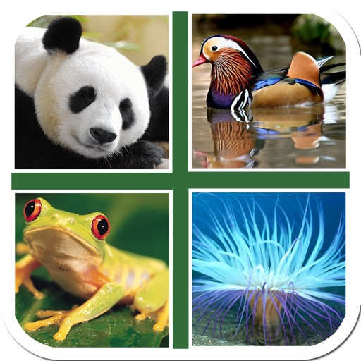 Puzzle & Guess Animal