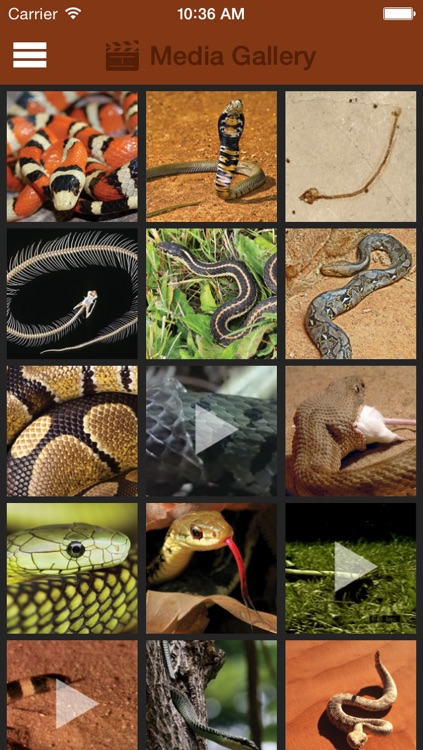 Britannica Kids: Snakes screenshot-1