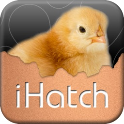 iHatch-Chickens