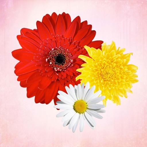 Примерун Цветы + фотошоп бесплатно + букеты подарки