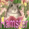 ハムスター飼育メモ
