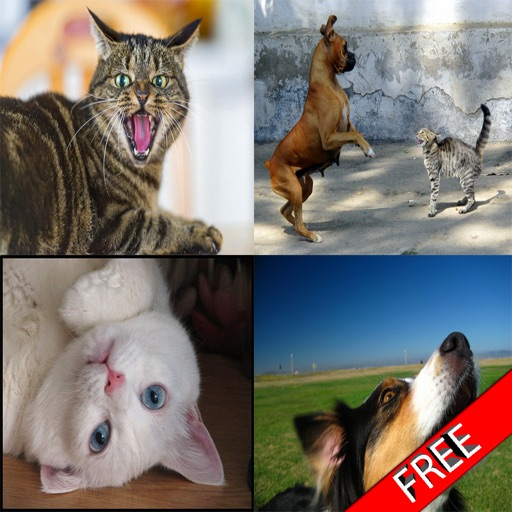 Cats & Dogs Sound Effects Free