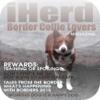 iHerd: Border Collie ...