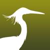 香港常見鳥類