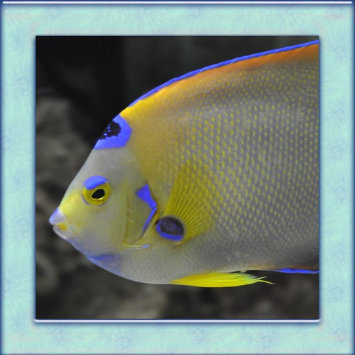 Tropical Fish Simulator 3D