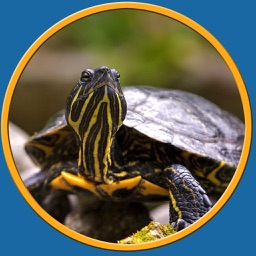 turtle pictures to win for kids - free