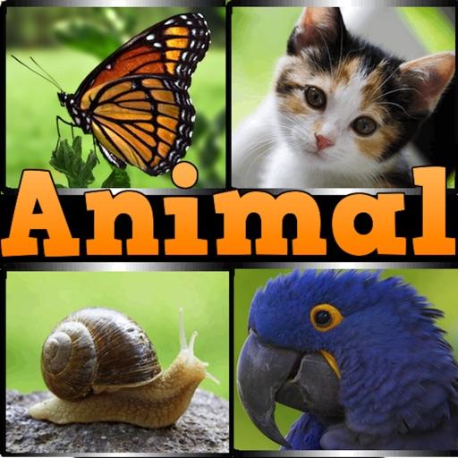 Animal?