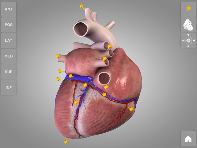 Herzanatomie - Heart 3D Atlas of Anatomy Preview im App Store