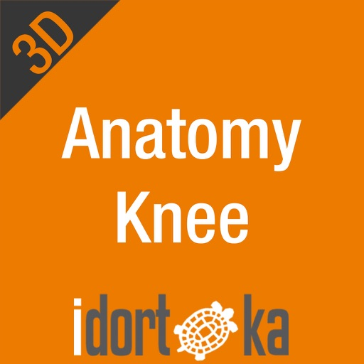 Anatomy Knee
