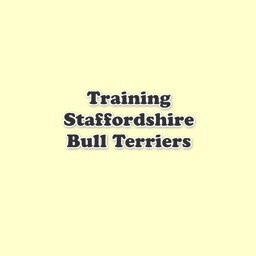 Training Staffordshire Bull Terriers