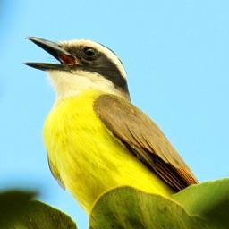 40 Bird's Calls & Songs
