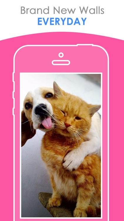 Free puppy & Kitten Wallpapers | Best HD Pictures screenshot-3