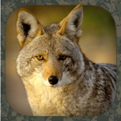 Coyote Hunting Calls app review