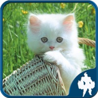 Codes for Cats Jigsaw Puzzles - Titan Hack