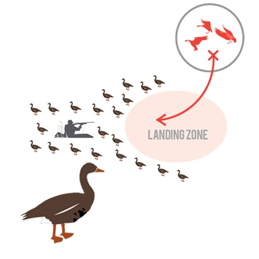 Greylag Goose Hunting Diagram Builder