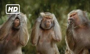HD Monkeys TV