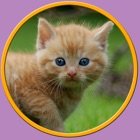 mis hijos y hermosos gatos - juego libre icon