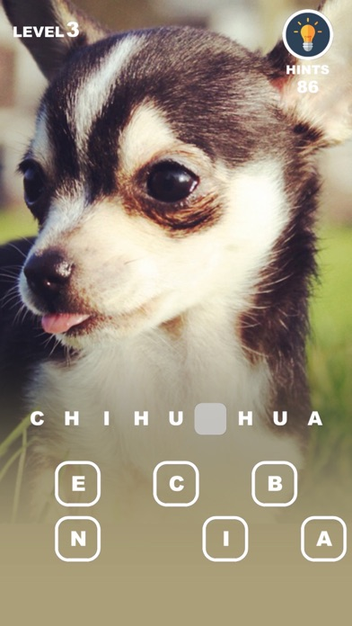 Dog Genius Photo Trivia With Puppies In Makeup By Dayin Yang