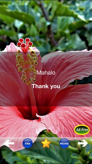 Hawaiian Words & Phrases! Hawaii Dictionary and Casual Language