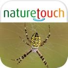 Spinnen und Spinnentiere bestimmen