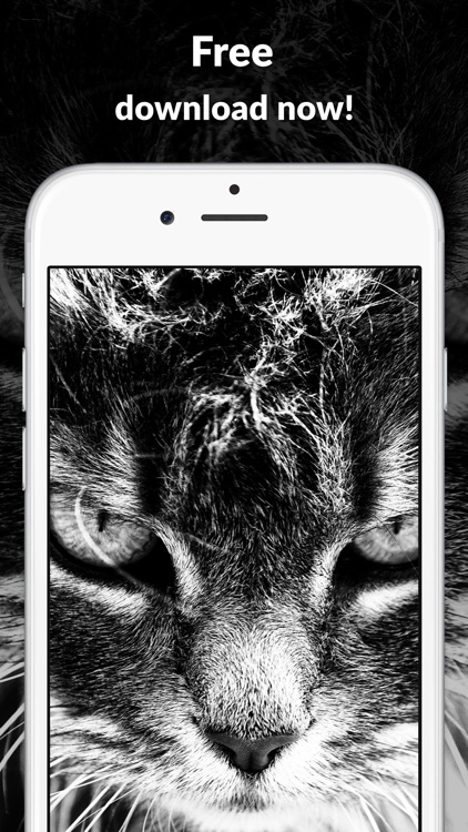 Pictures and wallpapers HD - best free designs for home and lock screens screenshot-3