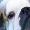 Hunde - Physiotherapie