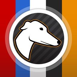 Greyhound Bet