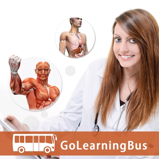 Human Body Anatomy & Strength Anatomy by GoLearningBus