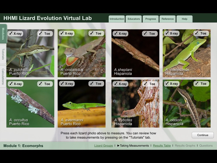 Lizard Evolution Virtual Lab