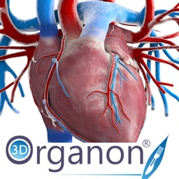3D Organon Anatomy - Heart, Arteries, and Veins